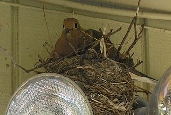 dove nesting on security lights