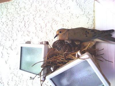 Babies In Nest