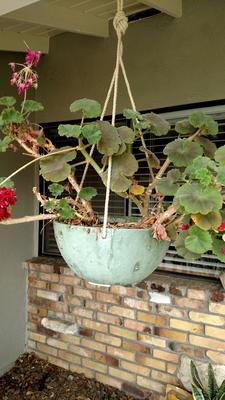 My Doves In Planter