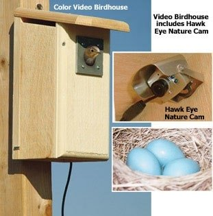 bird house camera