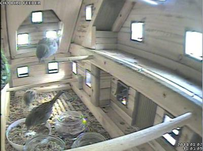 camera view of birds inside log cabin feeder