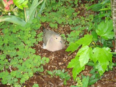 Molly Ground Nesting 2013