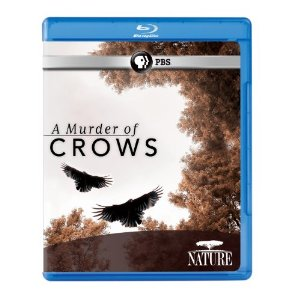 a murder of crows pbs Nature