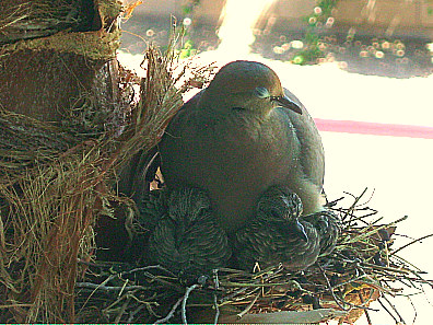 Momma sleeping with her Babies