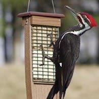 pileated woodpecker suet feeder