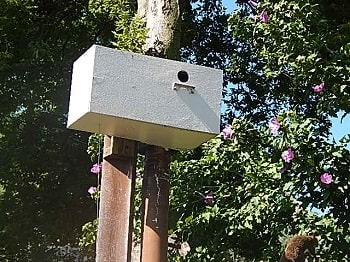 repeating nestbox trap