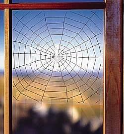 Stop Cardinals, Robins Pecking, Attacking Windows