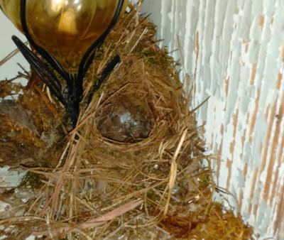 Discovering the empty nest!