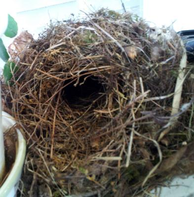 nest showing cavity