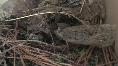 This was the nest the second day